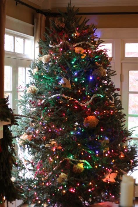decorated trees with multicolor lights white lights or multicolored lights for your tree