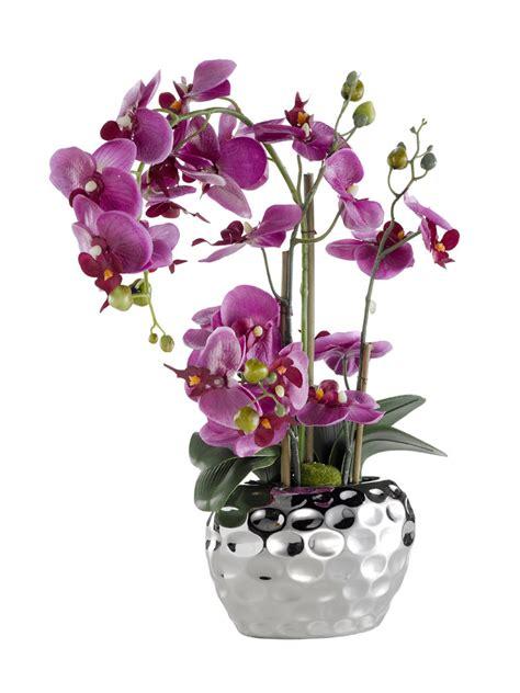 orchid 233 e en pot helline