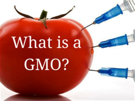 Modified Family Definition by What Is A Gmo Healthy Hud