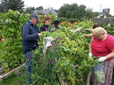 community vegetable garden vegetable gardens therapeutic gardens community