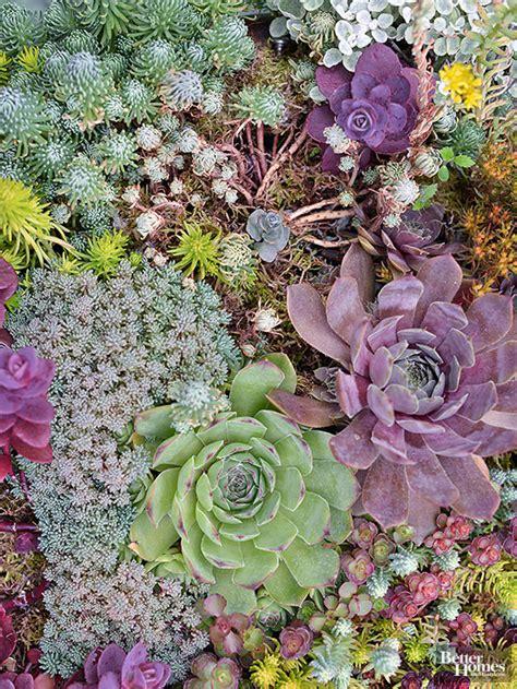 best plants for rock gardens best plants for rock gardens