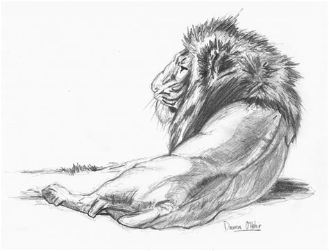 Pencil Artwork Images by 25 Best Ideas About Pencil Sketches Of Nature On