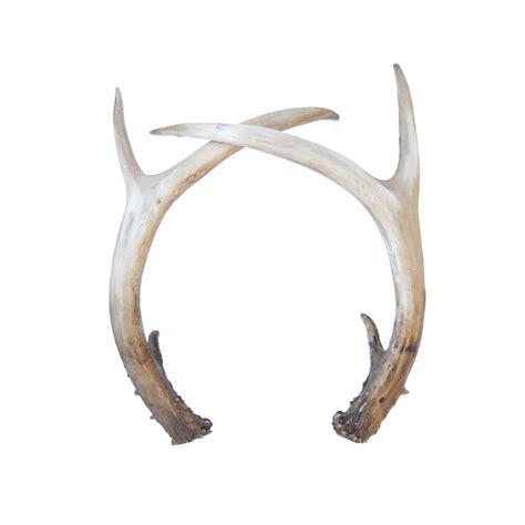 deer antler faux table top antler decor pair looking