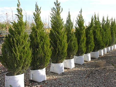 tree sales melbourne planting trees all the right aspects of their needs