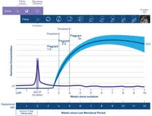 using a hcg test to detect pregnancy