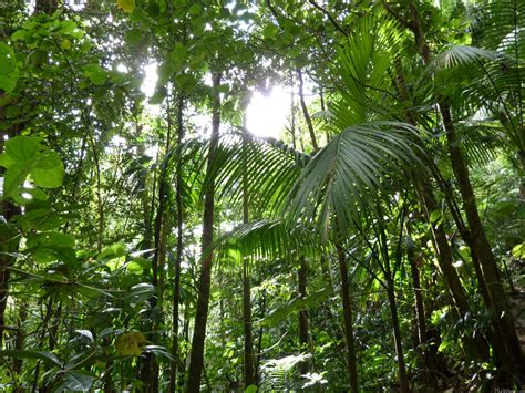 The Canopy Hours by Rainforest Canopy Www Pixshark Images Galleries