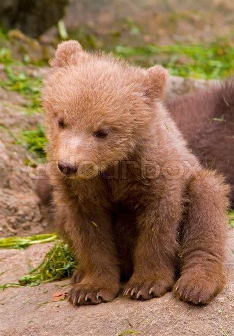 outdoor animals brown fur outdoors playful nature