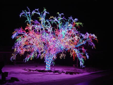 tree lights pictures hd wallpaper and background 1920x1440