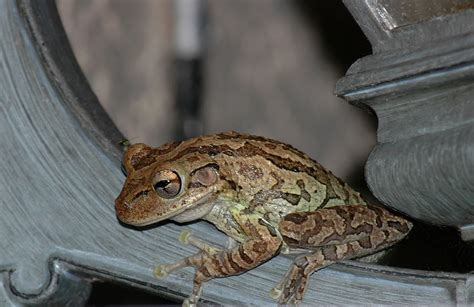 tree frog woodworking a city whose walls are broken the faithful wanderer