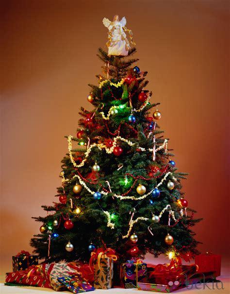 imagenes de navidad arboles pluma encendida por ang 233 lica d 237 az de vera como 225 rbol de