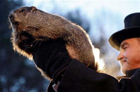 groundhog day meaning groundhogs predict an early the eye