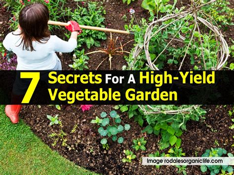 high yield vegetable garden 7 secrets for a high yield vegetable garden