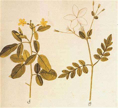 Ein Garten Meisterwerke Der Botanischen Illustration by Mahavamsa 15 Die Entgegennahme Des Mahavihara