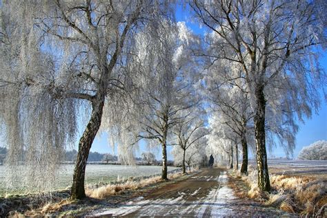 winter trees scenery pics images winter trees hd wallpaper and
