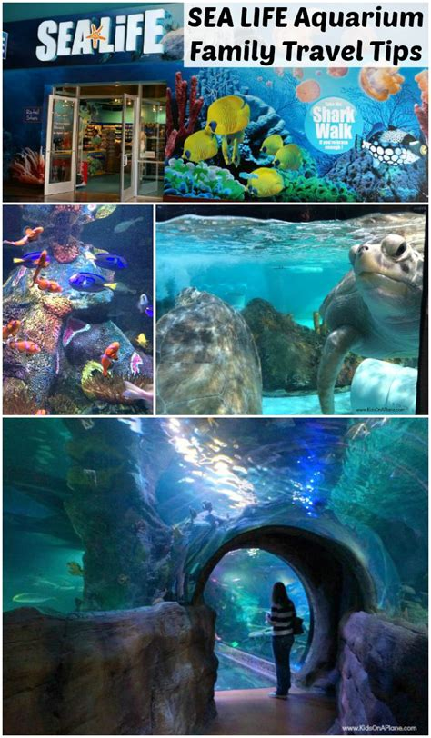 sea grapevine aquarium family travel tips