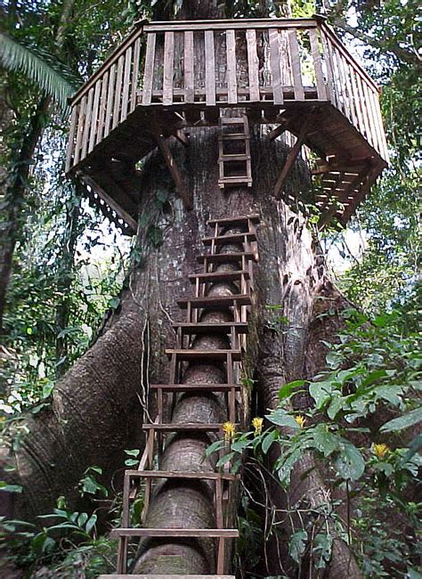 treehouse house file treehouse access and roundwalk jpg