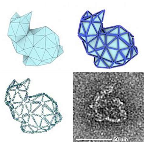 dna origami software folding tiny origami bunnies out of dna and why it s important