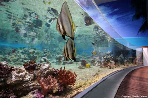 les plus beaux aquariums de les petits frenchies