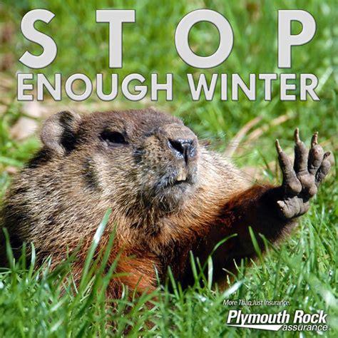groundhog day 2015 groundhog day meme