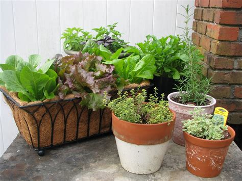 container gardens vegetables easy container gardening combining herbs and vegetables
