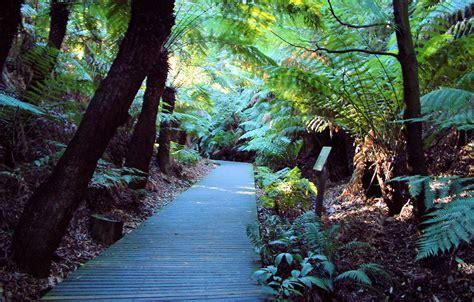 australian national botanic gardens canberra opiniones de australian national botanic gardens