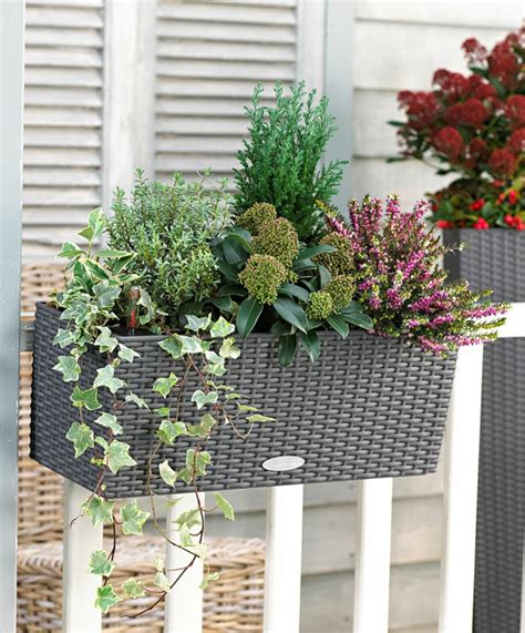 choisir une plante pour jardini 232 re quelques id 233 es et astuces archzine fr vivace