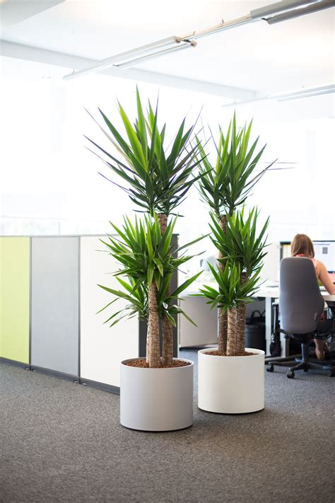 plants for the office images of live office plant displays office landscapes