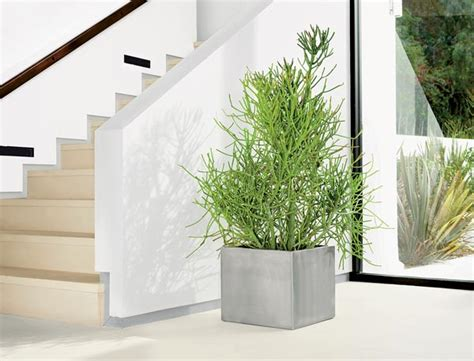 modern plants indoor the modern houseplant chicago magazine chicago home