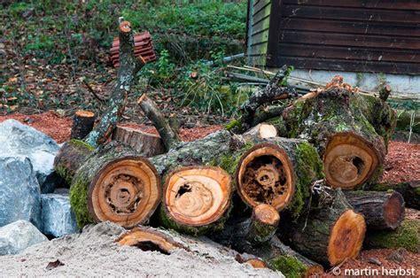 Garten Der Verborgenen Quelle by Garten Der Gr 252 Nspechte Totholz