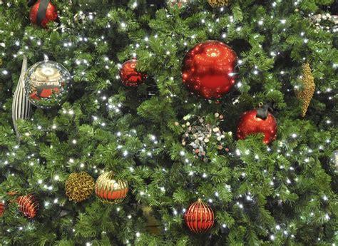 weihnachtsbaum pflege weihnachtsbaum wie er l 228 nger h 228 lt pflege tipps garten