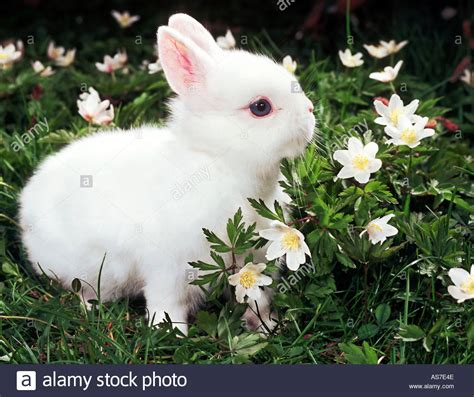 flower and bunny white rabbit in between flowers stock photo royalty