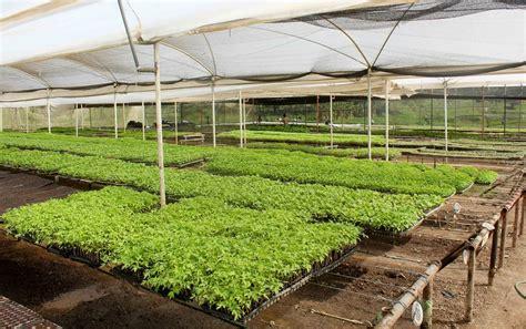 banco agricola de venezuela noticias banco agr 237 cola de venezuela