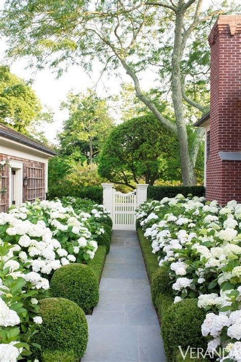 green garden flowers modern country style hydrangeas topiary and boxwood in