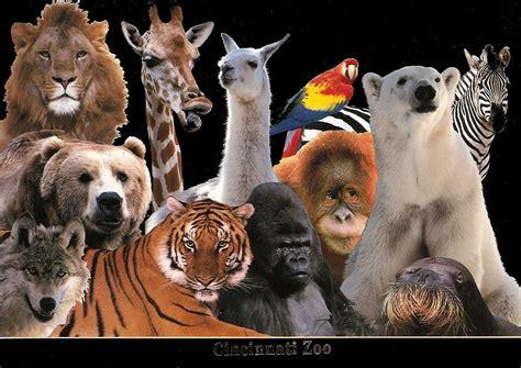zoo animals zoo cams related keywords zoo cams keywords