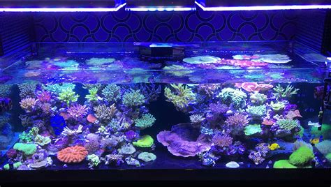 aquarium led lights orphek atlantik v3 plus reef lights now ready to ship orphek