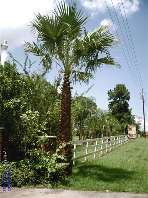 tree sales best 5 of trees for sale my ideas