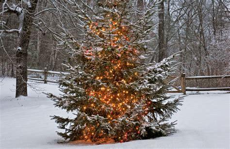best 28 cut your own tree ri tree