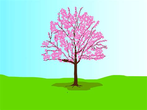 how to grow a cherry blossom tree 7 steps with pictures