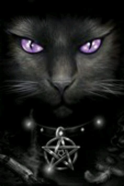 witches cat stokes don t care for the pentagram on cat but she