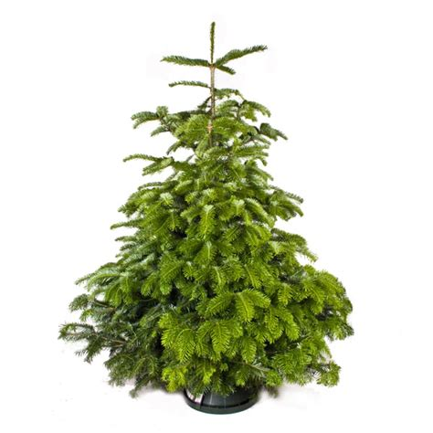 order real tree order your tree today flowers by tomaina