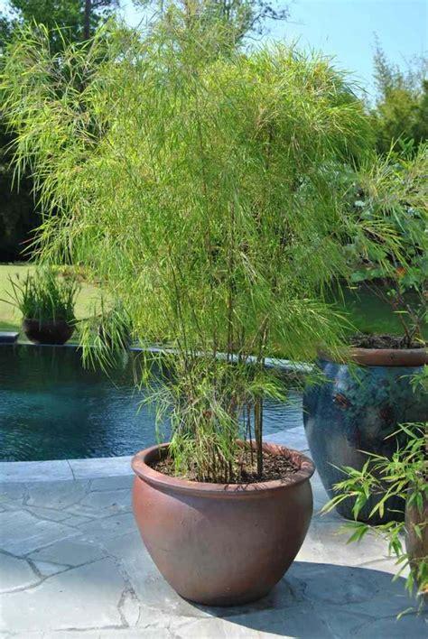 les 25 meilleures id 233 es concernant plantes en pot sur patio de plantes en pots