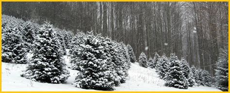 cut your own tree island images of lakeside tree farm ideas
