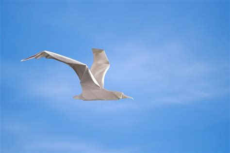 origami seagull origami sketchbook by morollon guallar book review