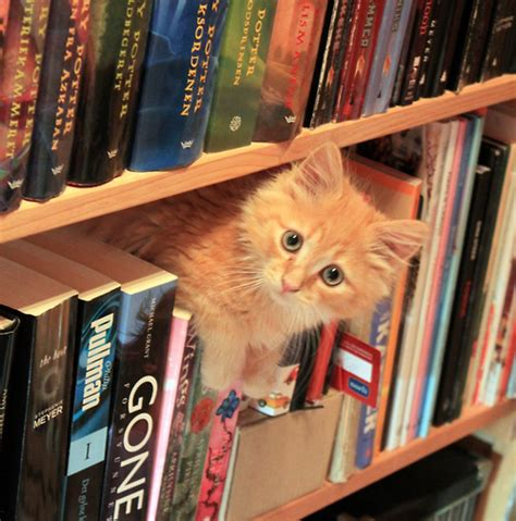 cat picture books saturdays the south literary cats free for all