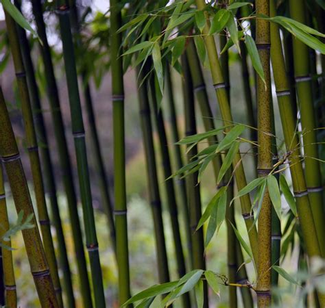 bamboo crafts for bamboo craft