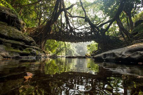 living bridges living root bridges mike marlowe