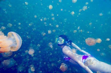 rubber sting magazines jellyfish how to treat sting magazine