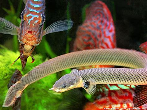 aquarium pour poisson d eau douce poisson naturel