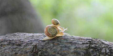 cria de caracoles en casa criar caracoles en casa