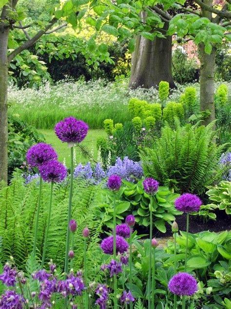 flowers shade garden best 25 ferns garden ideas on allium autumn